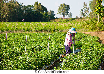 People working in the park of green peppers