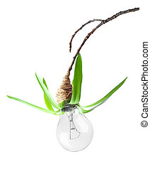 eco lamp with grass on tree branch
