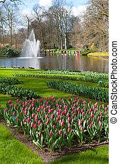 tulip garden in Keukenhof