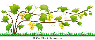 Grapes isolated bush with berries - Grapes - abstract shrub...
