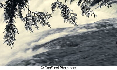 Falls and Cedar Branches - Close up of cedar branches with...