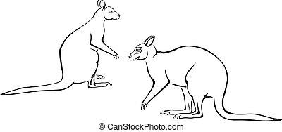 Couple of kangaroo