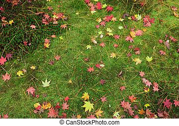 japanese fall background