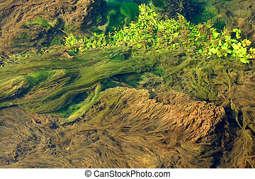 Algae and other vegetation floating on water