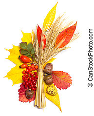 autumn elements - acorn, viburnum, rowan, briar, wheat and...