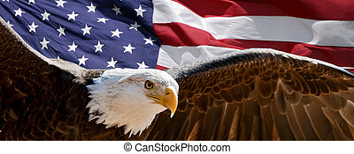 Patriotic Eagle - A bald eagle taking wing in front of a US...