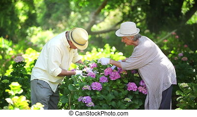 Mature couple cutting flowers in a garden
