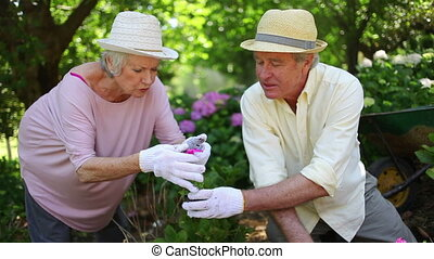 Mature couple gardening together in the backyard