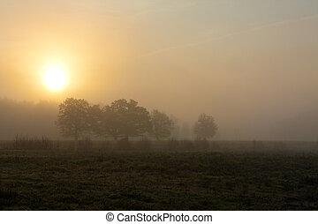 Foggy morning with tree and sun