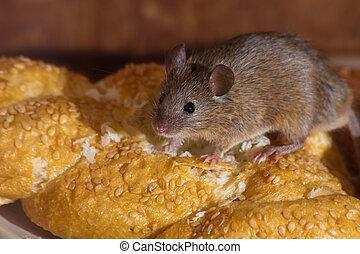ratón, cocina