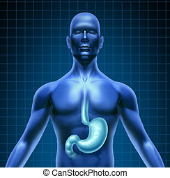 Stomach And Human Digestion - Stomach and human digestion...