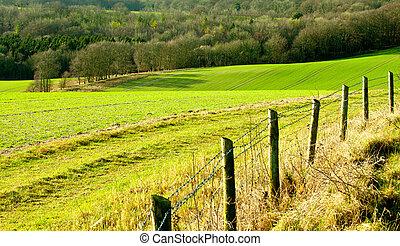 Rolling fields in rural England