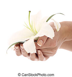 Woman hands and lilly flower over white background