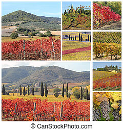 collage with fantastic landscape of tuscan vineyards in autumn