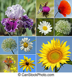 collage with rural flowers