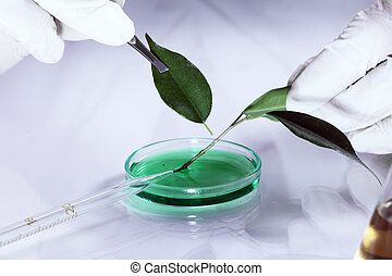 Science experiment with plant