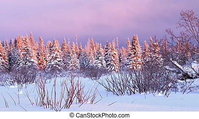 Snowy Darkening Alaskan Sunset - Time lapse of wintry spruce...