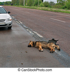 Car accident with dog on rainy highway