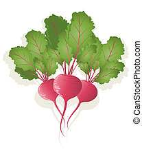 beetroot - an illustration of three bright red beetroot...