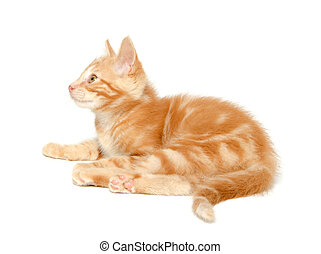 Cute yellow kitten on white