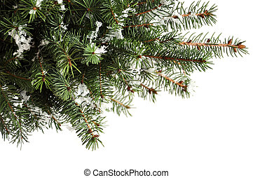 christmas tree branches - Beautiful christmas tree branches...