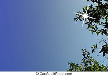 Stick in the sun