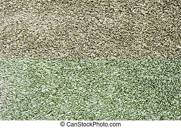 Grass for background ,texture and patten