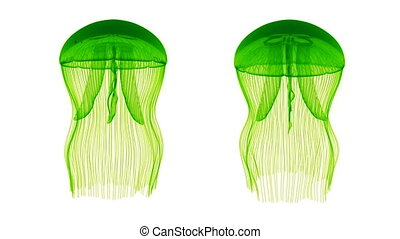 Jellyfish Assets Loop Green White - Jellyfish Nightlights...