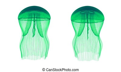 Jellyfish Assets Loop Turquoise - Jellyfish Nightlights...