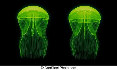 Jellyfish Assets Loop Green Black - Jellyfish Nightlights...