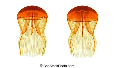 Jellyfish Assets Loop Orange White