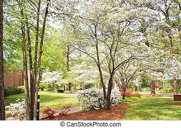 Spring scene - spring landscape scene with blooming dogwood...