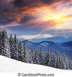 Winter landscape with fur-trees and fresh snow. Ukraine,...