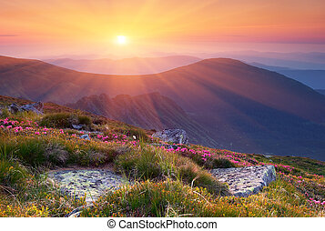 Summer landscape in mountains with the sun.