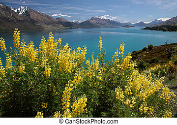 Yellow lupines at Lake Wakatipu between Queentown and...