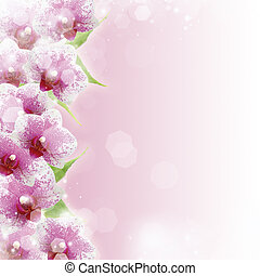 Pink orchids and copy space for text