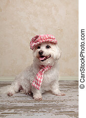 Cute dog wearing hat and scarf
