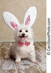 Puppy dog wearing bunny rabbit ears costume - Cute little...