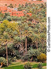 Oasis in Morocco. HDR image.