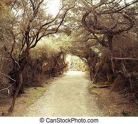 Mysterious footpath in the bushes - Mysterious footpath in...