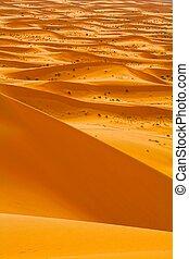 Sahara Desert Morocco. HDR image