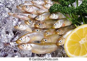 smelt - Cooking ingredient series smelt. for adv etc. of...