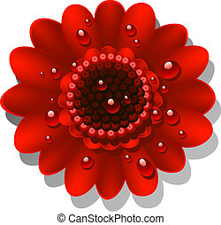 Beautiful red Gerber Daisy with dew drops. EPS 10, AI, JPEG