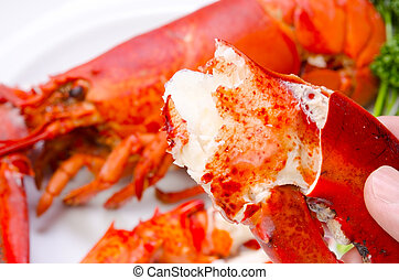 lobster - Cooking ingredient series lobster for adv etc of...
