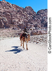 Camel and bedouin in Petra valley in antique city Petra