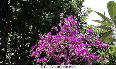 flower, Thailand