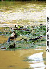 river water contaminated by human hands with their waste