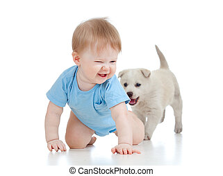 cute child playing and crawling away a puppy, puppy...