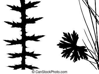 herb silhouette on white background,