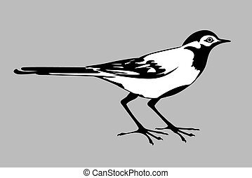 wagtail silhouette on gray background,